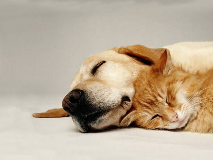 dogs-and-cats-sleep